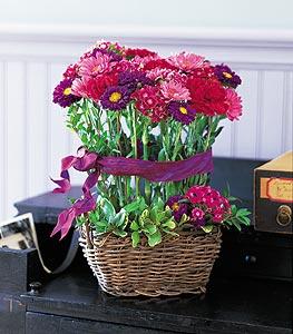 jersey flowers online